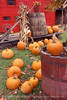 Gaggle of Pumpkins