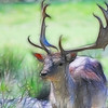 Photoshop treatment of an image of a stag in the New Forest.