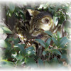 Our beautiful home bred Bengal Cat, Izzy.