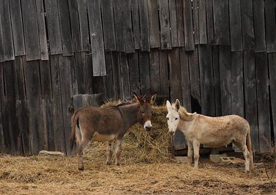 donkey IMG_9375