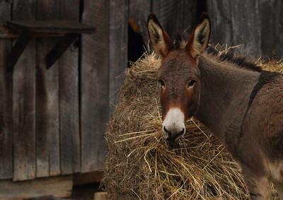donkey IMG_9387