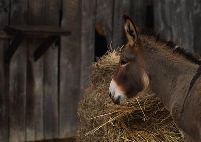 donkey IMG_9385