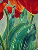 "detail of ""Tulips and Pushkinia"" © Anna Lisa Yoder 1995. Batik painted process on muslin. 6 X 8 ft."