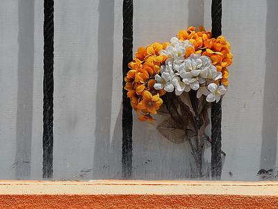 Bermuda;ces fleurs artificielles prisonnières dans une vitrine sous un soleil de plomb à l'heure du midi / artificial flowers prisonners inside this window under a harsh sun.