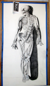 Anatomy class offered each fall.