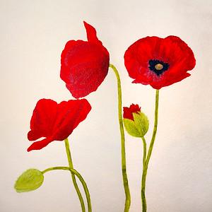Kitchen Poppies