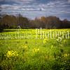 bright field