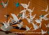 Origami Cranes at Shuga's Restaurant