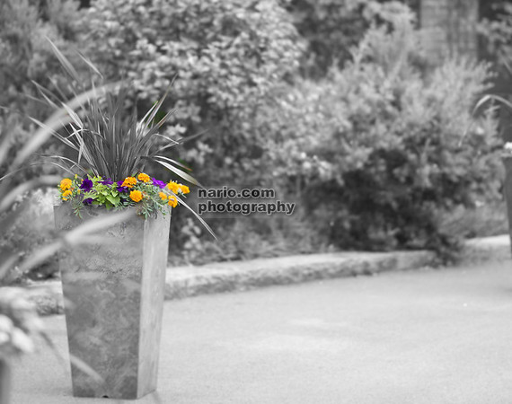 2013 photo shoot DSC_8318 - Version 2