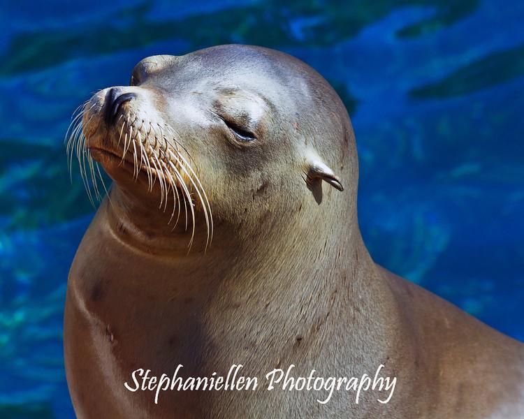 Sea Lion Sunning himself