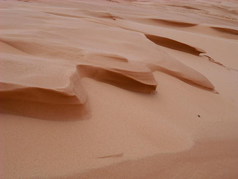 utah...coral pink sand dunes state park (digital image)