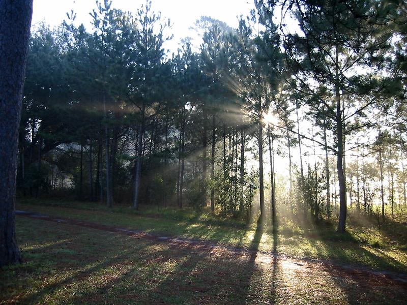 jogging at memorial park one foggy morning...houston texas..