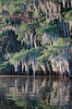 """caddo lake texas...no photoshopping on any of my photos...that """"blue"""" in the moss is from the setting sun...30 minutes later it was a nice purple but i couldn't get a good image....hope you enjoy---"""