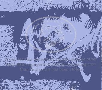 Horse & Farm Fine Art Photography