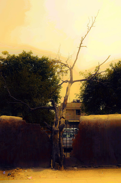 Tree at Chandni Chowk Delhi Metro Station