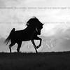Equine DReam-11x14