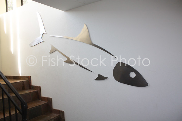 Giant Bonefish Wall Art