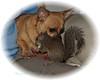 doggie and friend