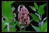 Flower 9088