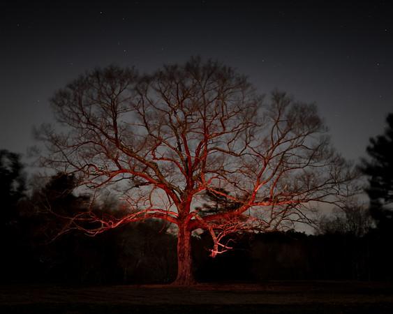 Trav's Tree at Night