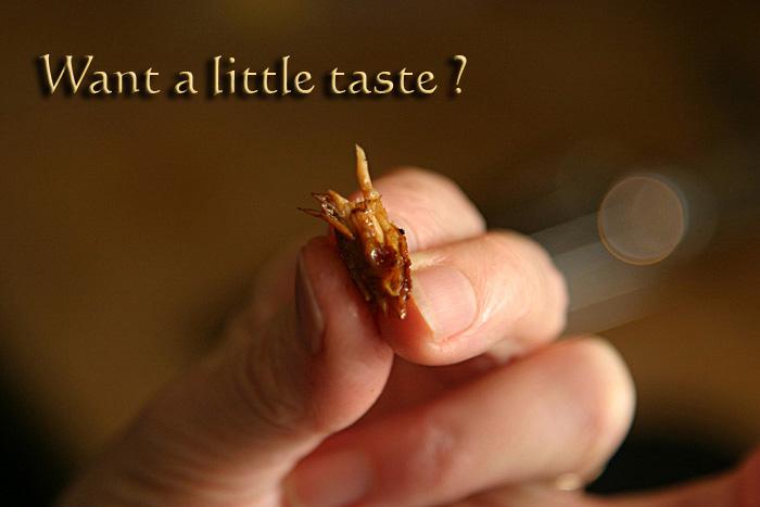 taste_9831