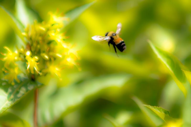 Bumble Bee Dream...