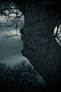 Old Tree Face