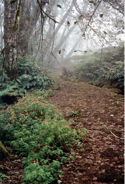trail mist