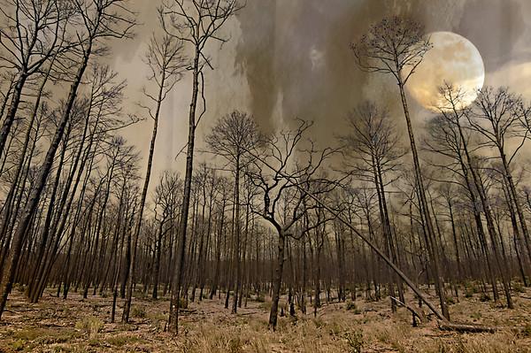 Bastrop Wildfire Rebirth