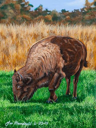 """""""Plains Buffalo"""""""