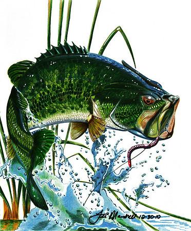 """""""Largemouth Bass"""""""