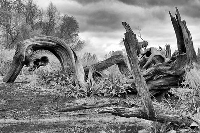 Dead wood along the banks of a canal in Clovis, Ca.