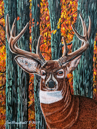 """Brown County Buck"""