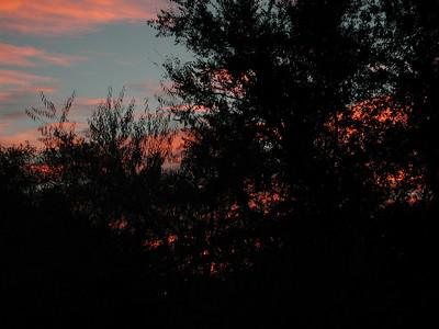 SunRises Dec.2010