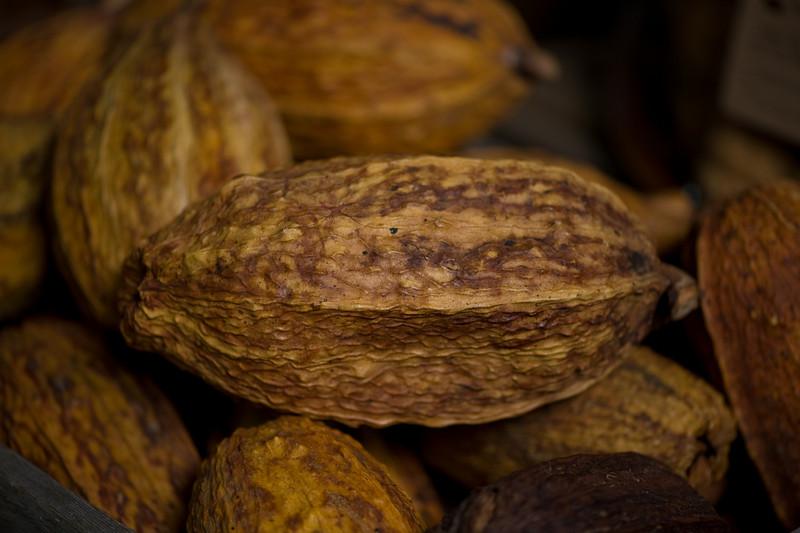Cacao Pod