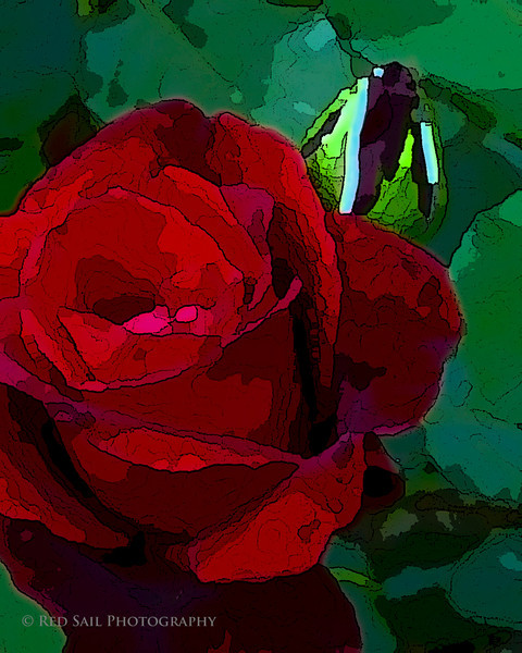 Rose with bud