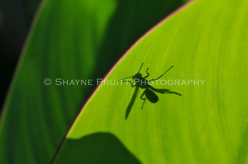 Wasp in Shadow