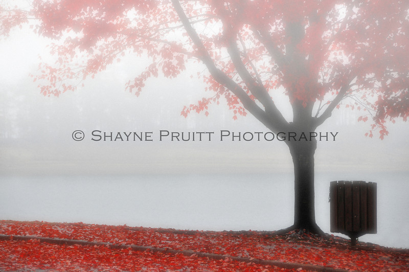Red Leaves in a Heavy Fog