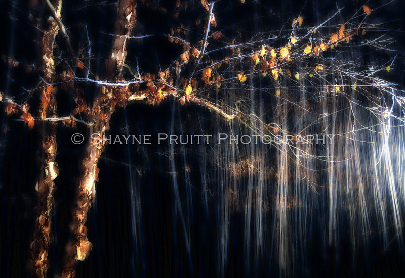 "Falling Snow with a Long Exposure. This image won best of show for the 2011 Dawson Arts Council's ""Motionality"" show."