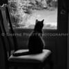 Cat Contemplating His Next Adventure