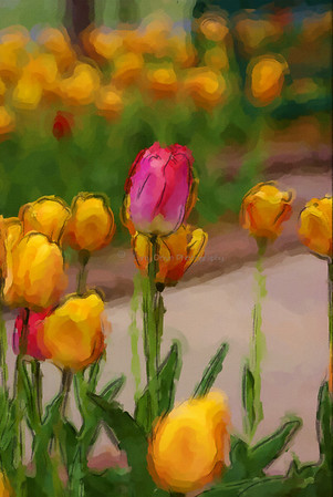 Tulips-watercolor 2