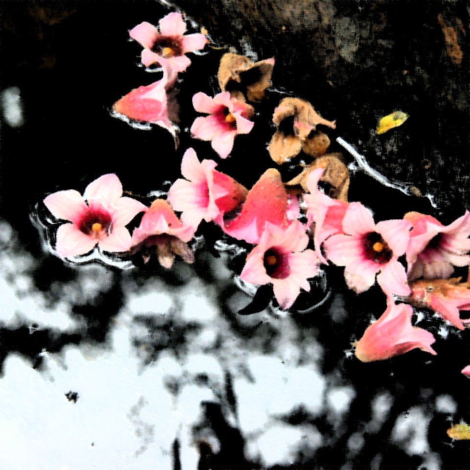 Yabba Blooms