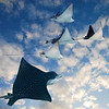 composite of eagle ray and cloud images