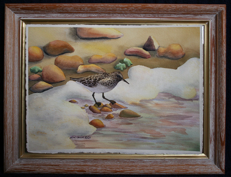 Sandpiper (Watercolor)