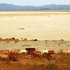 Myanmar, Irrawaddy Plain