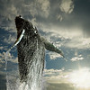 humpback whale image composited on cloud background