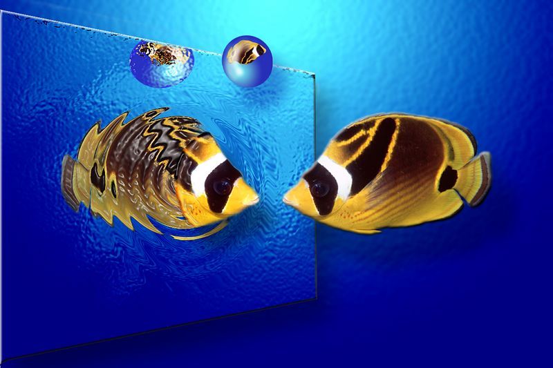 """""""Was it racoon art I saw""""<br /> racoon butterfly fish image composited on artwork background<br /> 4"""