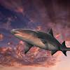 shark image composited on sky background