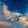dolphin image composited on cloud background