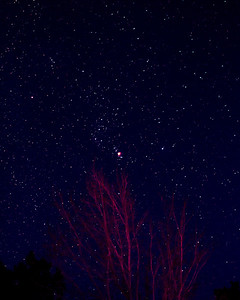 Orion and trees